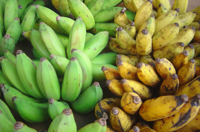 Plantain vs Banana? Which one is better?