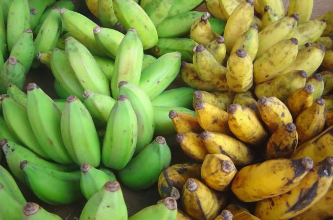 Plantain vs Banana