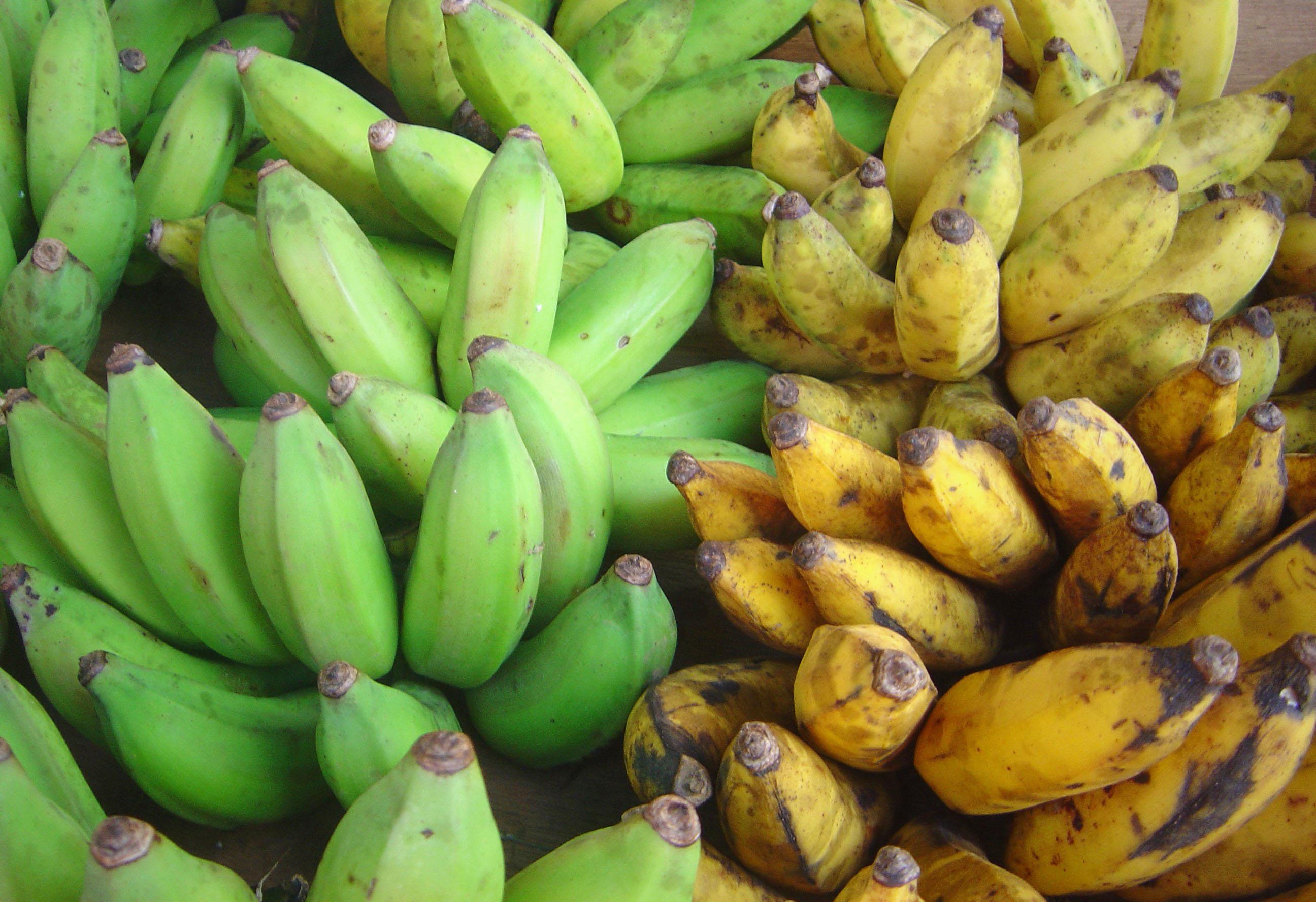 Banana vs Plantains