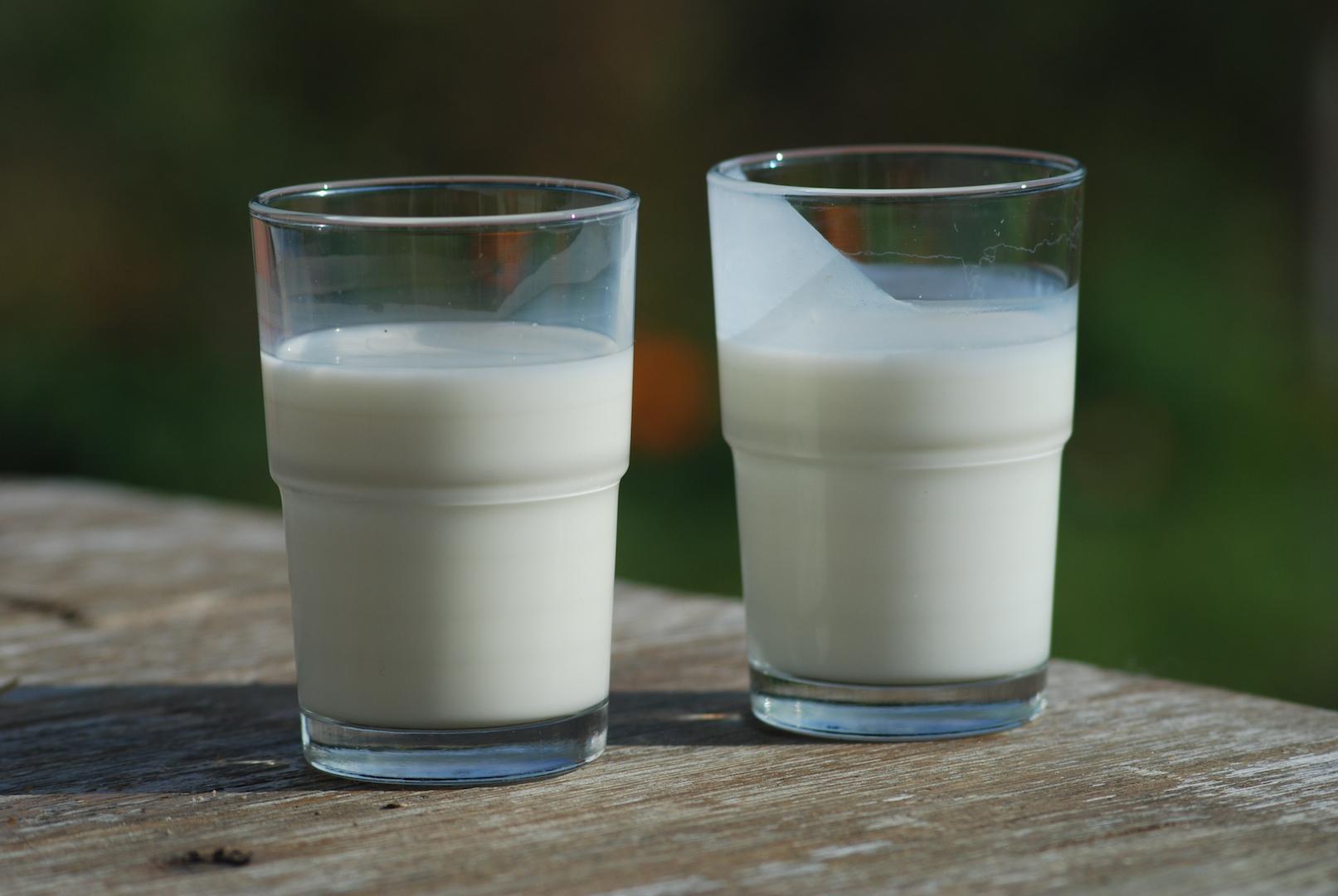 Which milk is the best?